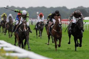 Horse Racing Racecards Form